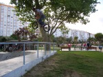 renato-jam-da-pascoa-over-the-fence-360
